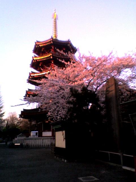 桜と五重の塔